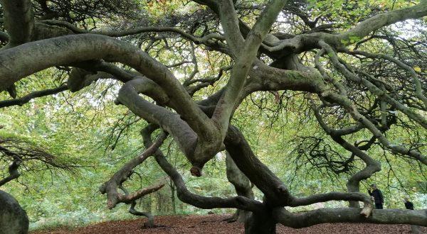 Rügens Wälder